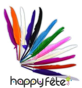 12 plumes colorées d'Indien