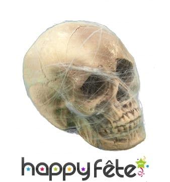 Crâne entouré de toile d'araignée