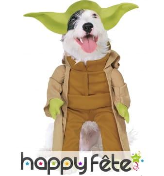 Déguisement de Maître Yoda pour chien