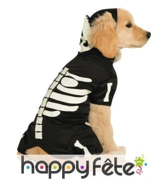 Déguisement squelette phosphorescent pour chien