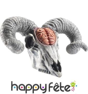 Faux crâne de bélier avec cervelle. En latex