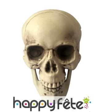 Faux crâne réaliste en plastique