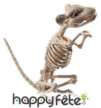 Faux squelette de rat