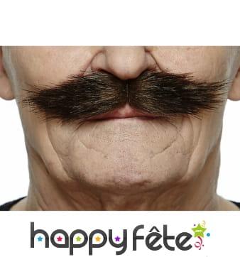 Moustaches de Lord anglais brunes