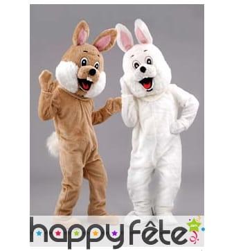 Mascotte lapin blanc ou brun