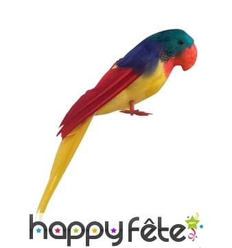 Perroquet coloré décoratif
