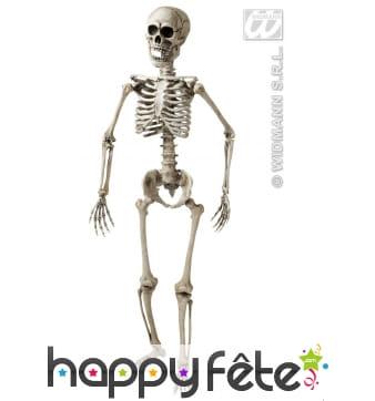 Squelette articule 3d