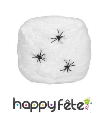 Toile d'araignée et araignées décoratives