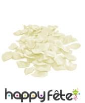 144 petales de rose blanc ivoir