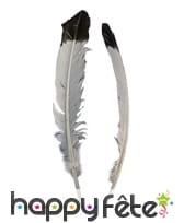 2 plumes blanches à pointe noire