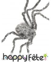 Araignée grise de 160cm, image 1