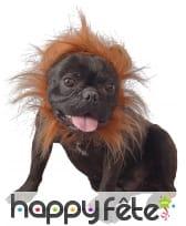 Costume de lion pour chien