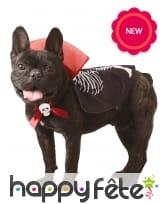 Costume de vampire pour chien