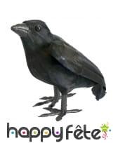 Corbeau noir à plumes, décoratif