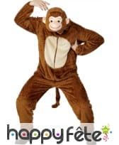 Costume singe