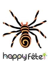 Enorme Mygale jaune et noir yeux lumineux