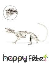Faux squelette de rat décoratif de 23cm
