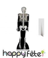 Grand squelette en carton plat
