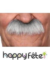 Moustaches de vieillard