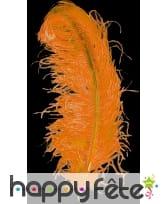 Plume autruche orange extra 50 cm