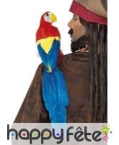 Perroquet épaule