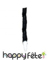 Queue de chat noire bout blanc