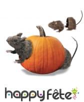 Rat coupé en deux à associer avec un fruit