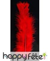 Sachet 50 plumes rouge pied plat 10 cm