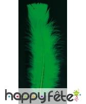 Sachet 50 plumes vert pied plat 10 cm