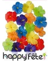 Sachet de 18 fleurs d'ibiscus