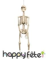 Squelette de 95x21cm à suspendre
