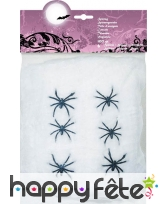 Toile avec 6 araignées