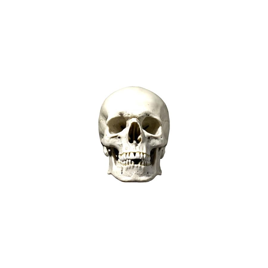 Masque de t te de mort en carton - Image de tete de mort ...